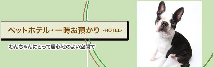 当店のペットホテル・一時お預かりは、わんちゃんにとって居心地のよい空間です。