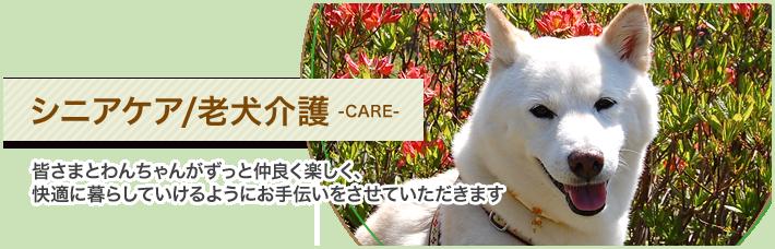 シニアケア/老犬介護